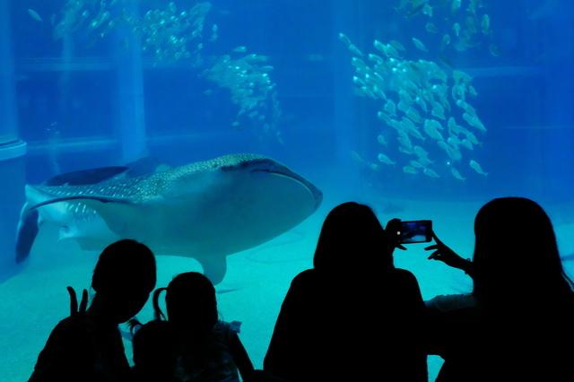 海遊館のジンベイザメ