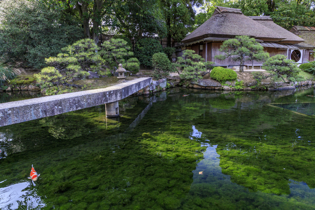 池の透明度がすごい岡山後楽園